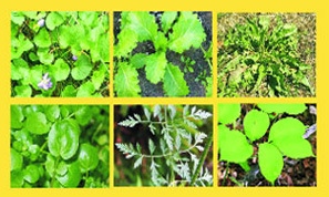 Herbally Fresh - Herb Articles